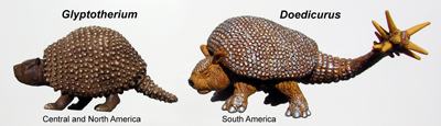 Glyptodont1