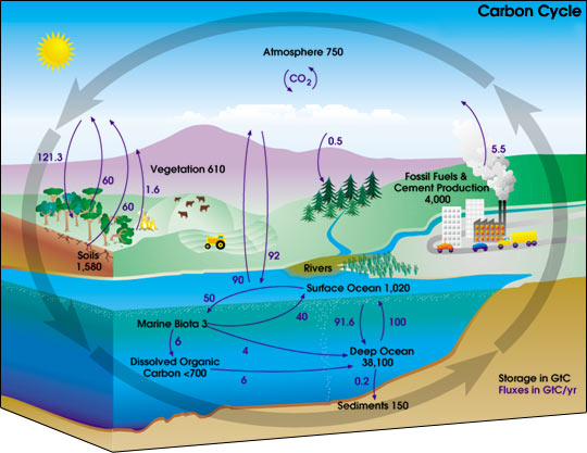 carbon-cycle-diagram