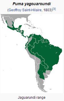 Jaguarundi  range map