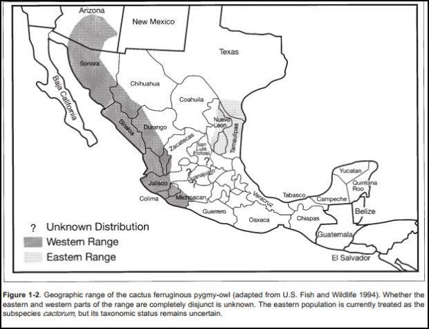 Cactus ferruginous owl range map