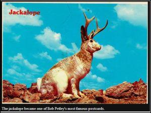 Jackalope Petley