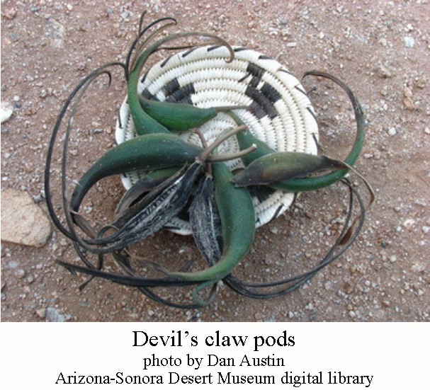 Devils claw pods
