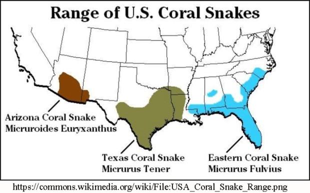 Coral snake range
