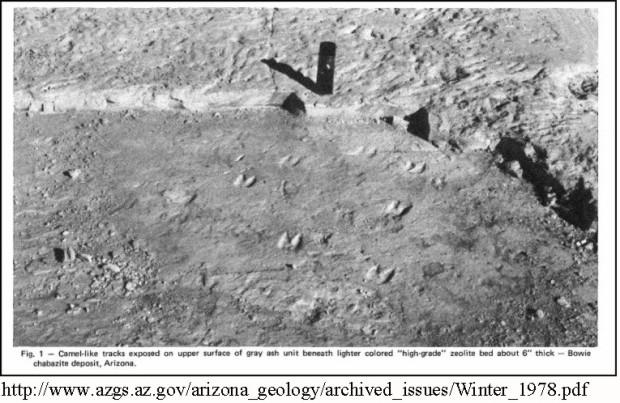 Bowie footprints