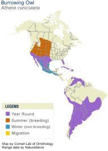 Burrowing owl range map